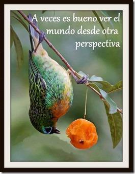 perspectiva_thumb.jpg